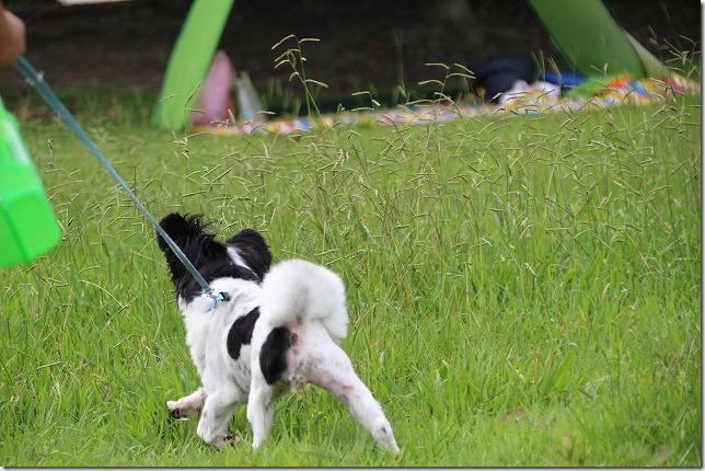 今津運動公園を犬の散歩