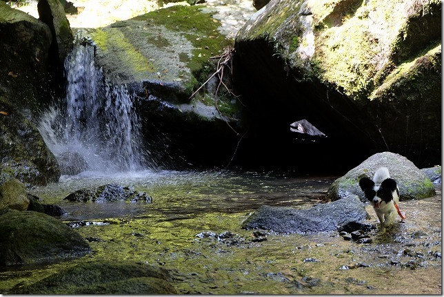 糸島、千寿院の滝で犬と