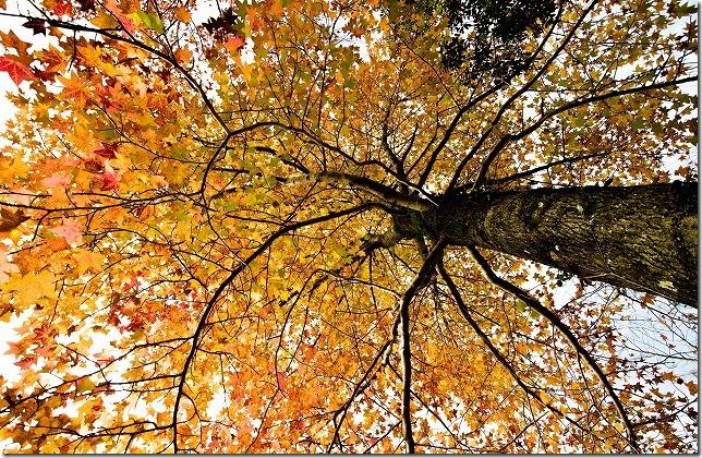 西部霊園公園の紅葉(福岡市西区)