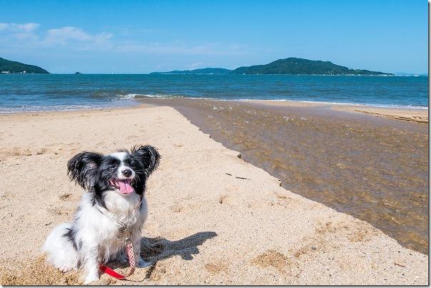今宿の砂浜終点、犬