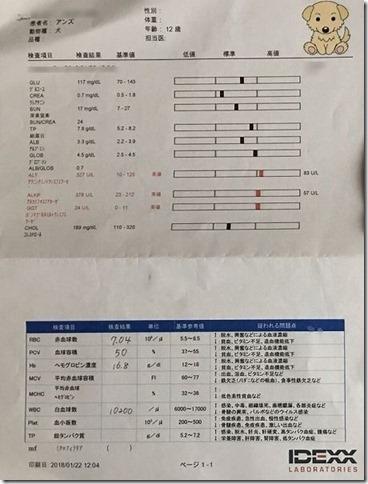 犬の血液検査