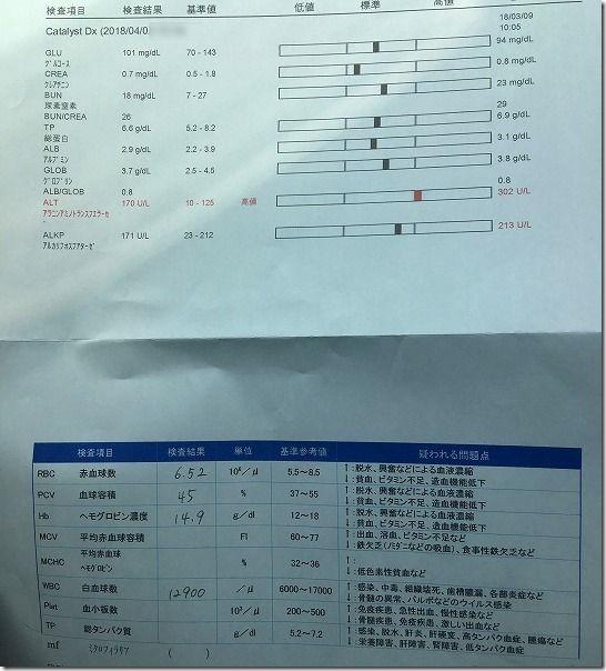 抗癌剤治療中のパピヨン犬の血液検査結果