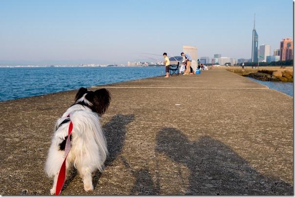 愛宕浜を犬の散歩