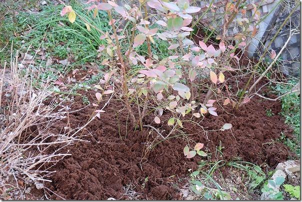 ブルーベリーに針葉樹の皮