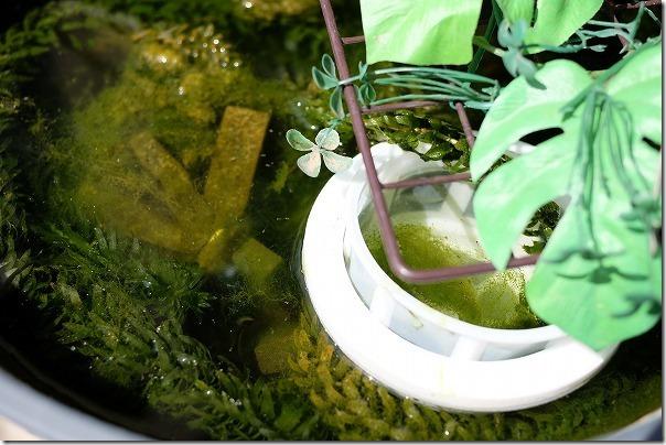 メダカ稚魚の育成ように浮くメッシュ