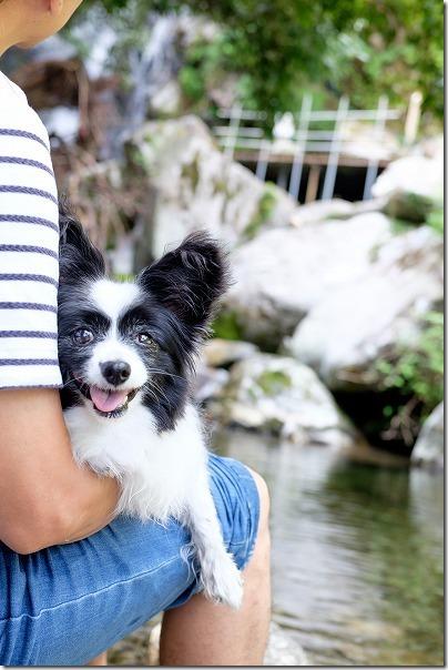 坊主ヶ滝で犬とのんびり