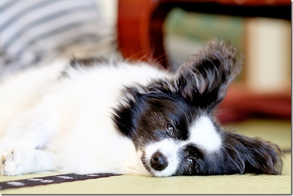 犬と宿泊した宝来館の部屋