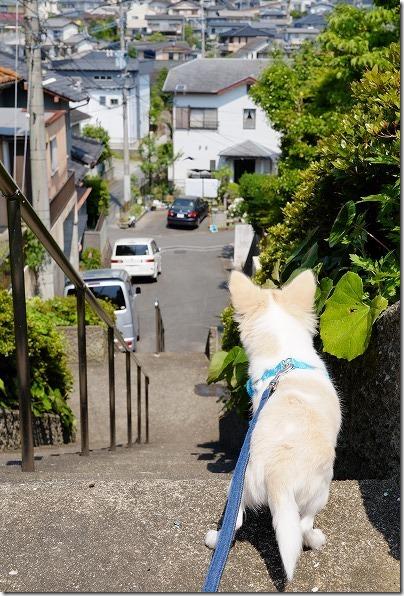 チワワが高台から一望