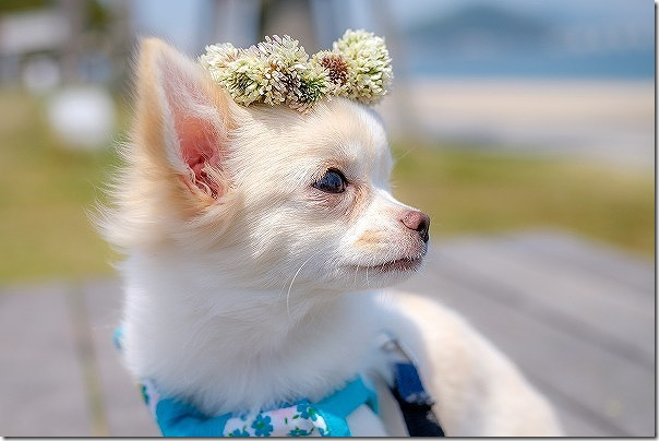 長垂海浜公園で犬の散歩