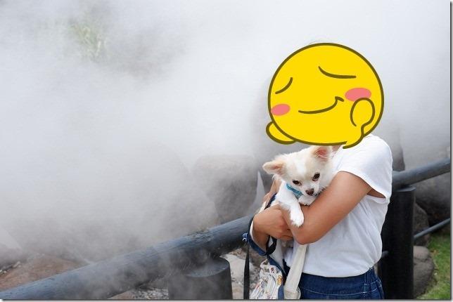 別府海地獄の湯けむりと子供と犬