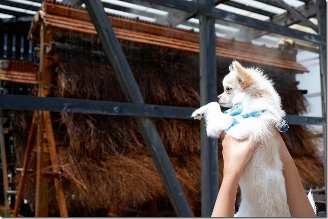 別府ひょうたん温泉の竹製の温泉冷却装置,犬と見学