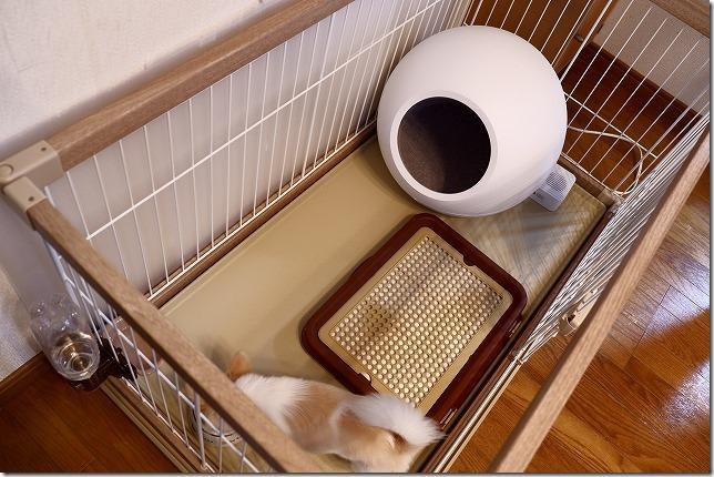 犬に快適な夏,冷房付きCOZYをケージに設置