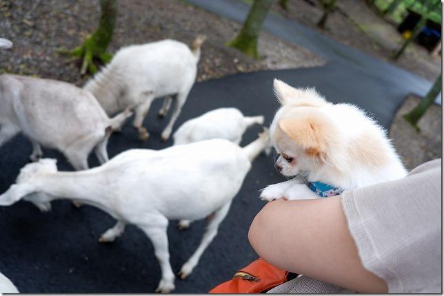 「くじゅう自然動物園」を犬と一緒に