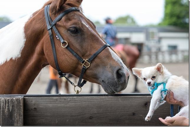 くじゅう,犬と旅行,馬と犬
