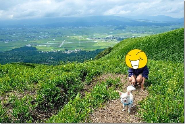 犬連れて大観峰を散策・チワワ