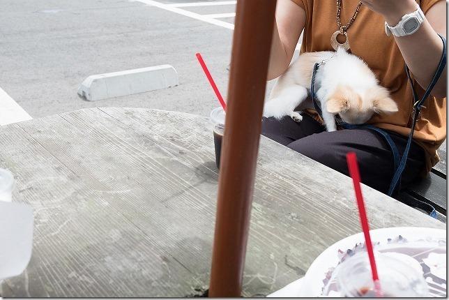 かぶと岩展望台 ピッグフルークカフェでランチのテラス席で犬とランチ