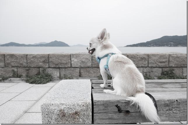 福岡市西区の小戸公園に犬と散歩