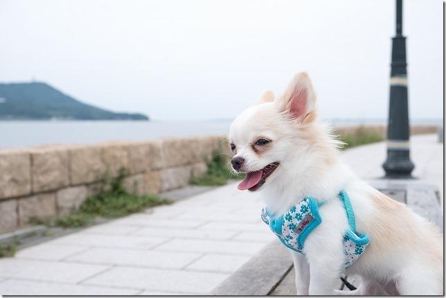小戸公園の海と犬