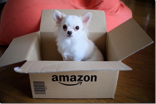 Amazon箱の中にチワワが一匹