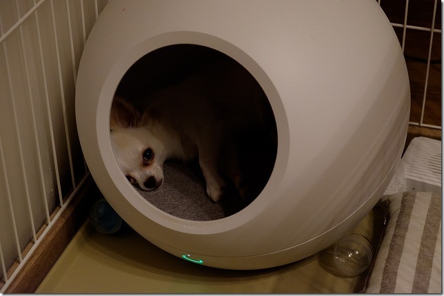 サコダCOZYで寝る犬