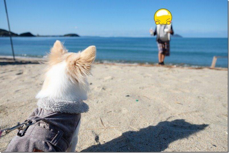 Plus Nao(プラスナオ) 犬用 ジャケットを着せて出かけたレビュー