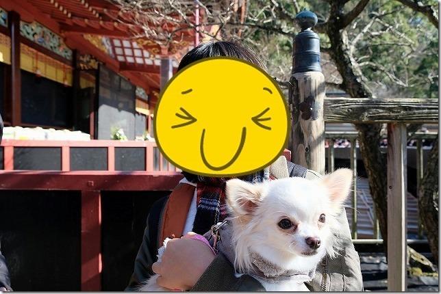 チワワ(犬)連れで太宰府で三社参り、太宰府天満宮