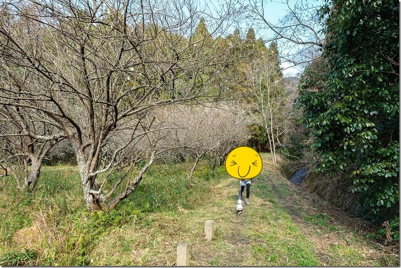 糸島、小富士梅林を犬と散歩風景