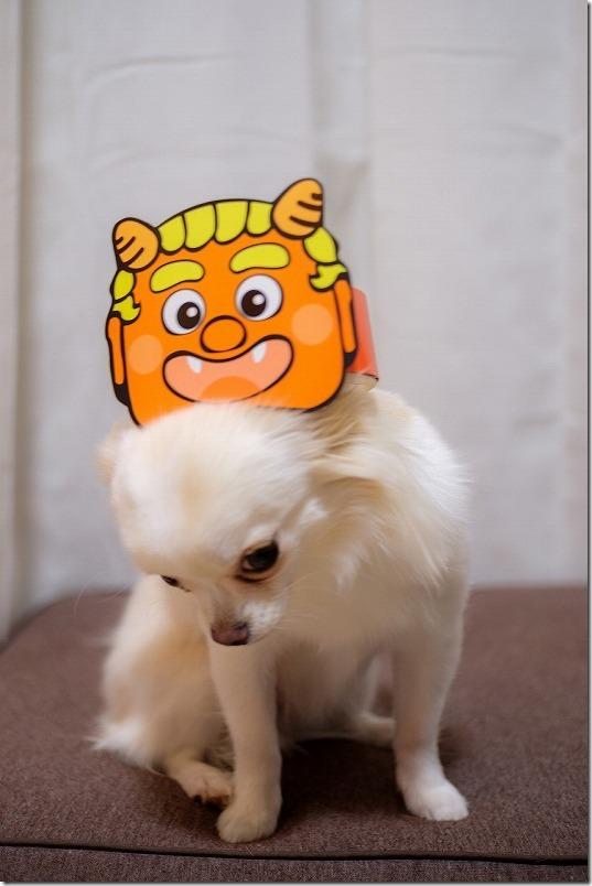 「こむぎ(チワワ・犬)」も節分で鬼面