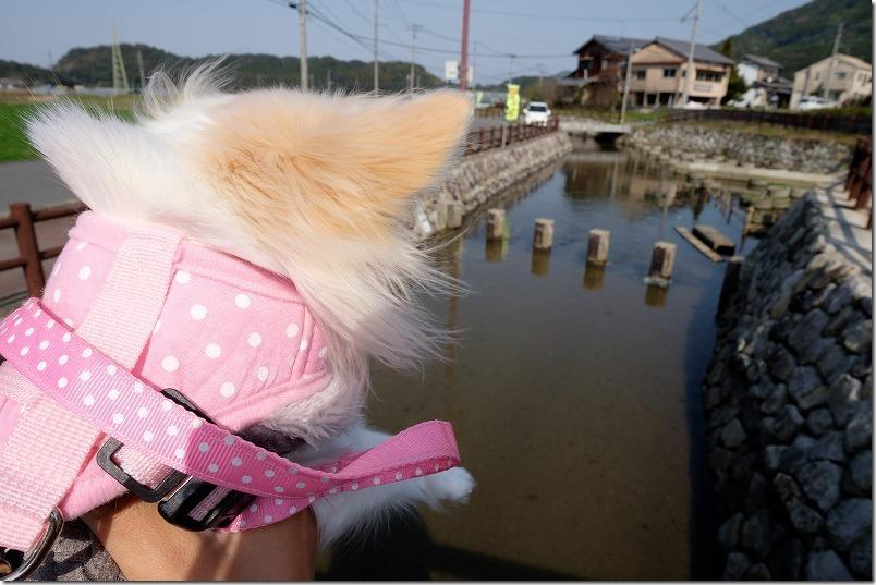 那珂川・初御代桜へ犬と散策・散歩