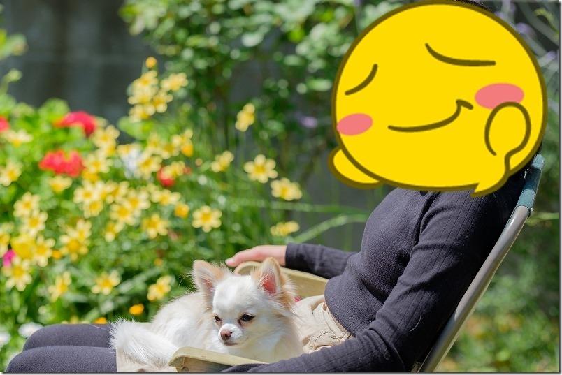 犬と庭でピクニック