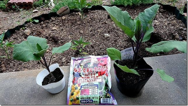長なすの苗と肥料。3号と4号