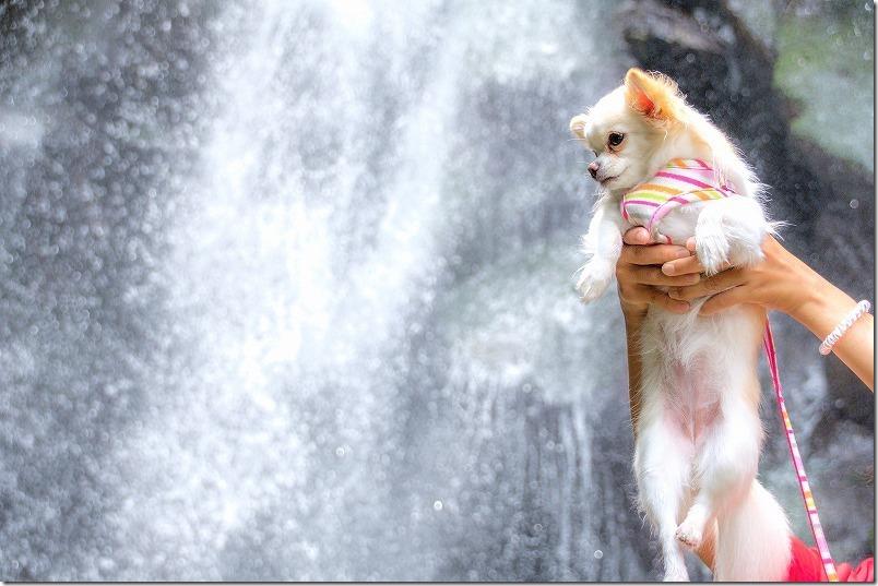 坊主ケ滝(福岡市早良区)の滝壺