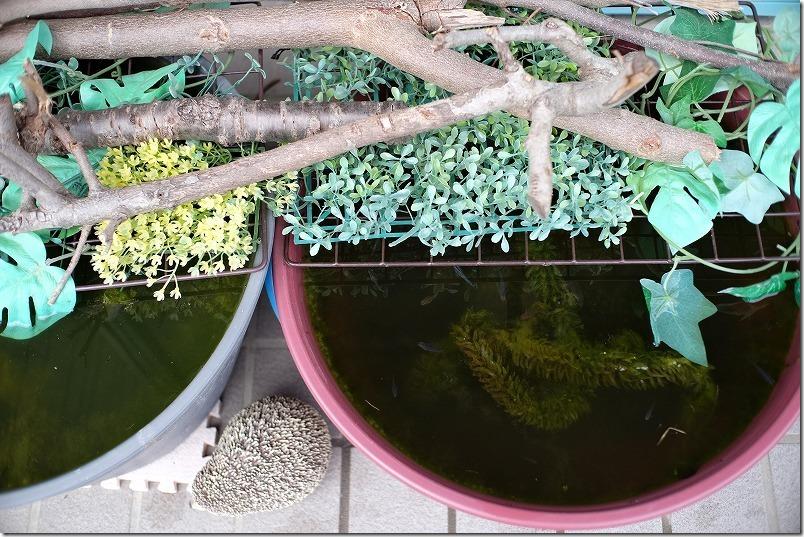メダカ鉢に使えるプラスチックのプランター(アイリスオーヤマ)