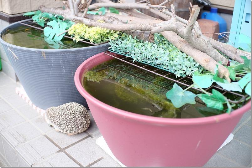 メダカ鉢にアイリスオーヤマ、ライズボールプランター