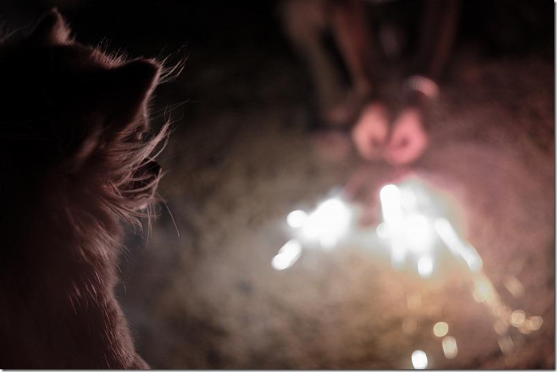 糸島HIDEAWAY、sunset、campの犬と花火