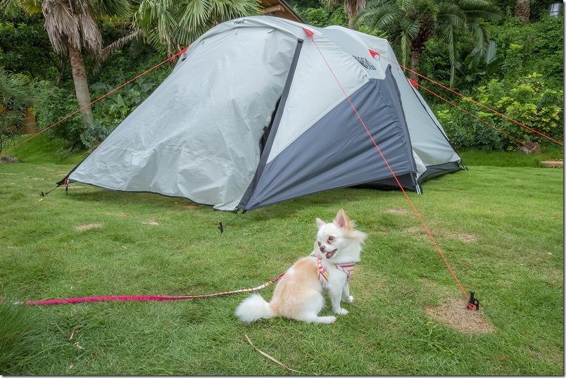 犬と一緒に糸島でキャンプ、テント組み立て中
