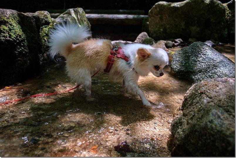 油山市民の森、水の森周辺で犬も水遊び