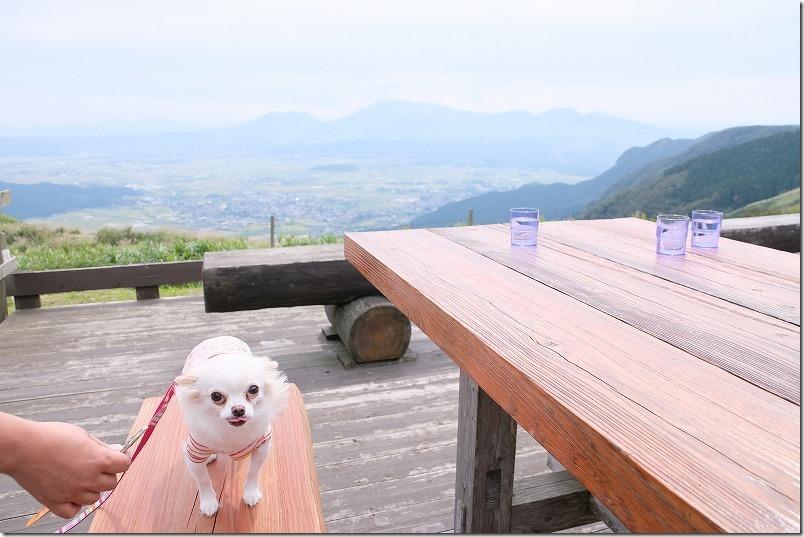 レストラン北山のテラス席で犬と食事(あか牛丼)、阿蘇