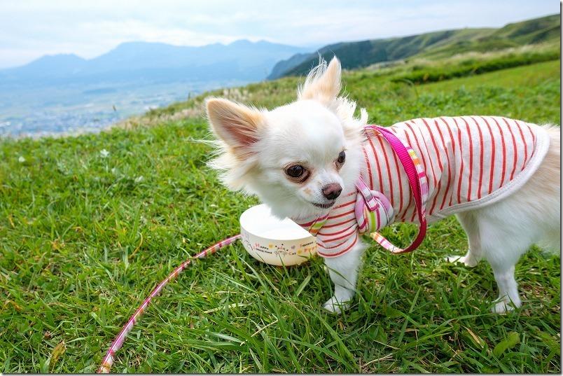 犬とレストラン北山で開店待ち、阿蘇外輪山