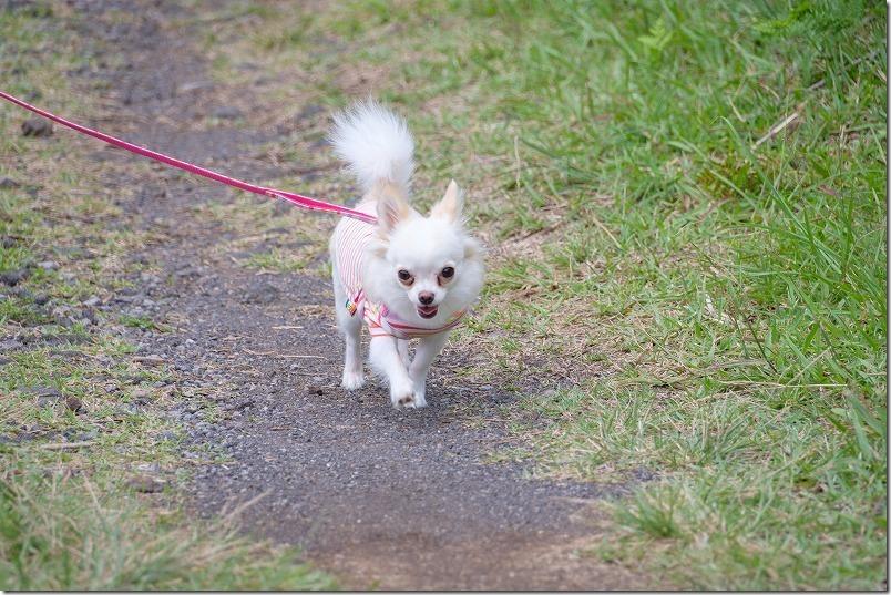 田子山展望台を犬とお散歩