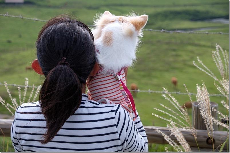 阿蘇、池の窪園地を犬と子供と見学