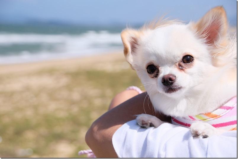 海の中道海浜公園の海と犬