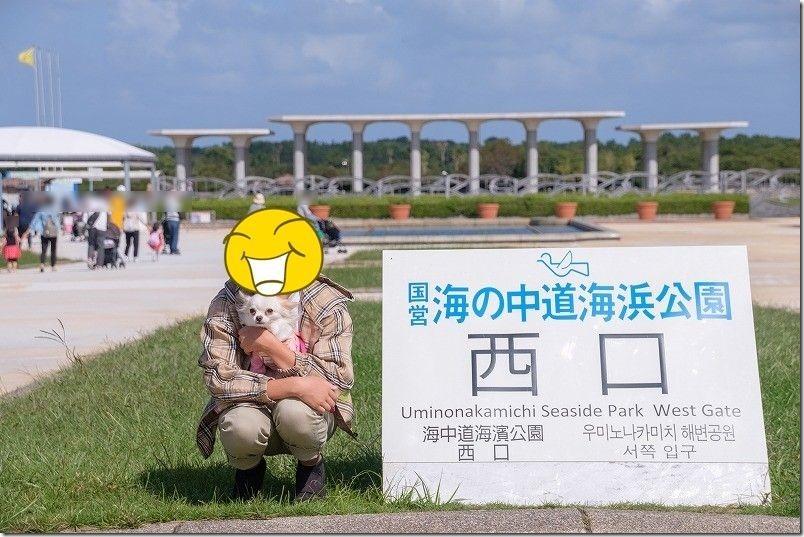 犬を連れて海の中道海浜公園へお出かけ
