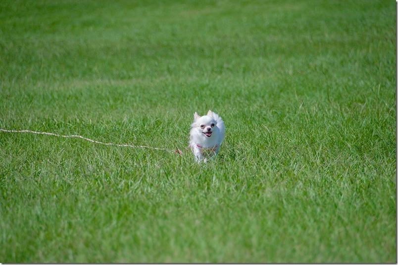 海の中道海浜公園で犬連れで散歩(芝生広場)