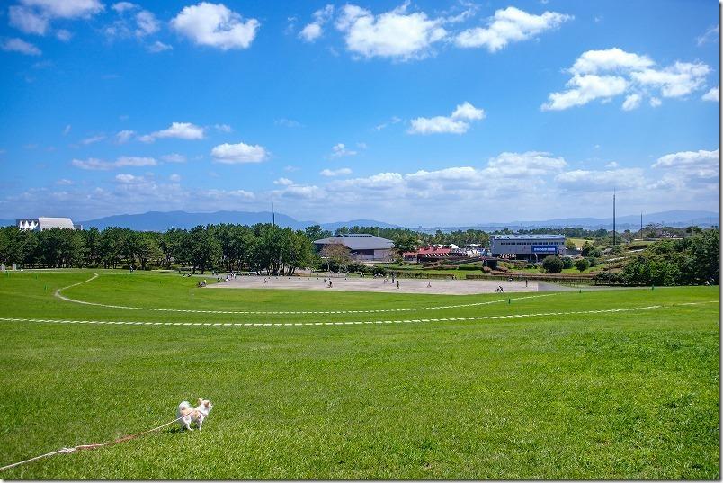 海の中道海浜公園の芝生の丘で犬と休憩
