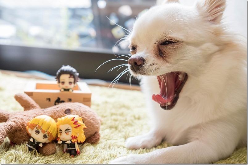 鬼滅の刃,ナムコ限定の「ちょこっとひっかけ フィギュア」,チワワ犬