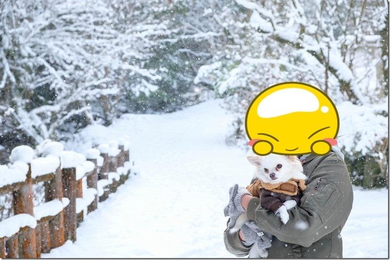 福岡も雪景色、チワワの「こむぎ」とお散歩(野河内渓谷)