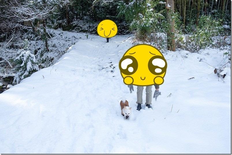 雪道をチワワのこむぎと初散歩
