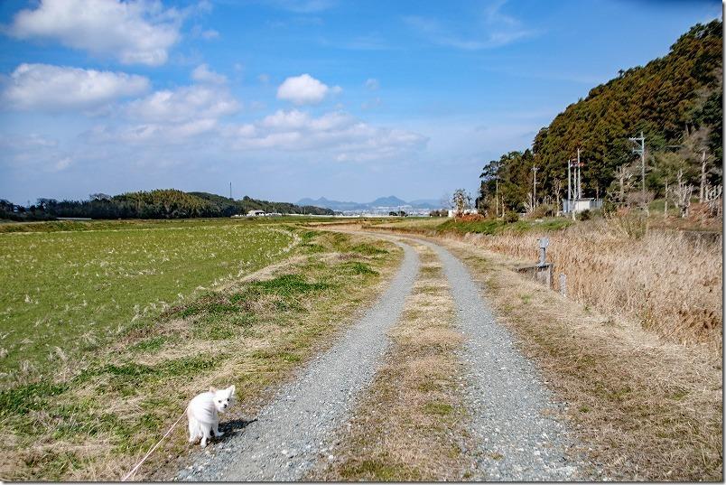 糸島瑞梅寺川沿いをお散歩