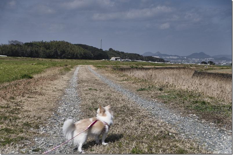 瑞梅寺沿いで犬の散歩とツクシ取り